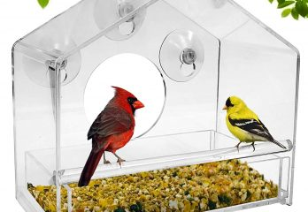 Top 5 best bird feeder kits in 2020 review