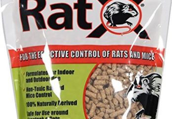 Top 5 Best Rat Poisons With Good Flavor For Indoor And Outdoor Review